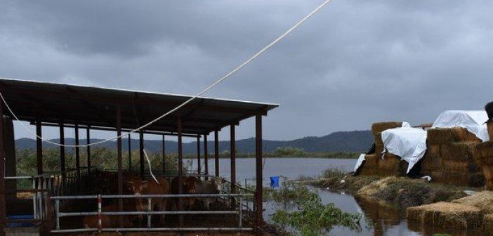 Πλωτές… οι καλλιέργειες και οι περιουσίες στον κάμπο Λεσινίου (video)